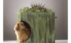 Casas Ecológicas para seu cachorro